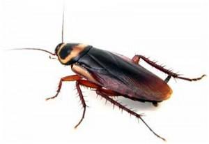 cockroach copy